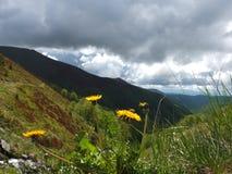 在山的春天 图库摄影