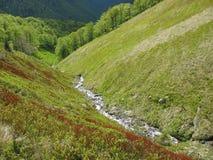 在山的春天 免版税库存照片