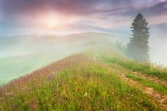 在山的有雾的夏天日出 库存图片