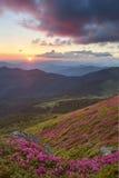 在山的杜鹃花 图库摄影