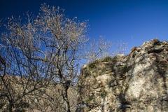 在山的树 图库摄影