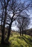 在山的树 免版税图库摄影