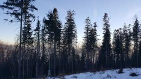 在山的树 免版税库存图片