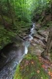 在山的森林小河 免版税库存照片