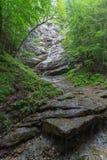 在山的森林小河 库存图片