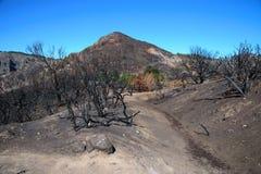 在山的森林火灾 免版税图库摄影