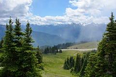 在山的森林风景,奥林匹克国家公园,华盛顿,美国 库存图片
