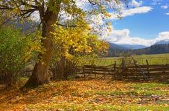 在山的槭树 免版税库存图片