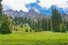 在山的横向夏天 库存照片