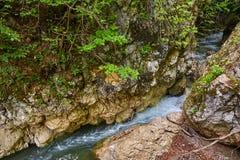 在山的河急流 库存图片