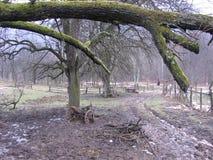 在山的泥泞的路 图库摄影