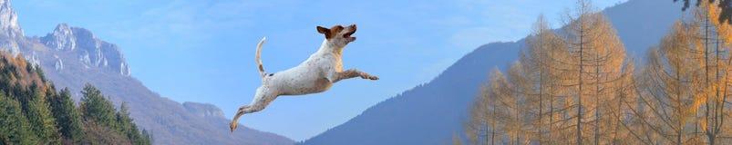 在山的狗 免版税库存照片