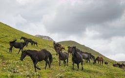 在山的疾驰马 免版税库存照片