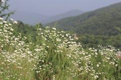 在山的白花 免版税图库摄影