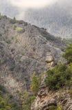 在山的看法与树 免版税库存照片