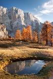 在山的秋天夜间 免版税图库摄影
