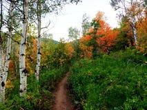 在山的秋天季节 库存照片