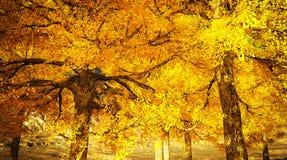 在山的秋天颜色 库存图片