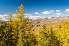在山的秋天 风景全景 免版税库存照片
