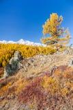在山的秋天 风景全景 库存照片