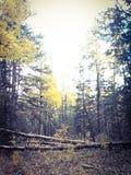 在山的秋天 图库摄影
