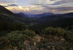 在山的科罗拉多野花在日落 图库摄影