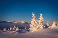在山的积雪的冷杉木 图库摄影