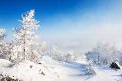 在山的积雪的树 免版税库存图片