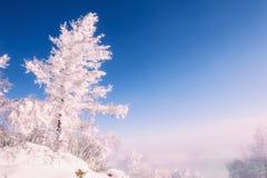 在山的积雪的树 图库摄影