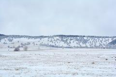 在山的积雪的结构树 库存图片