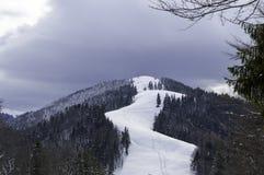在山的积雪的结构树 33c 1月横向俄国温度ural冬天 免版税库存图片