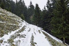 在山的积雪的结构树 33c 1月横向俄国温度ural冬天 图库摄影