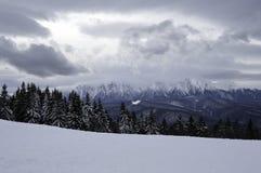 在山的积雪的结构树 33c 1月横向俄国温度ural冬天 库存照片