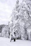 在山的积雪的结构树 33c 1月横向俄国温度ural冬天 库存图片