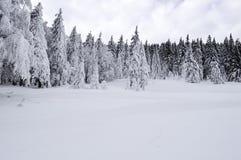 在山的积雪的结构树 33c 1月横向俄国温度ural冬天 免版税库存照片