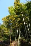 在山的竹子 免版税库存图片
