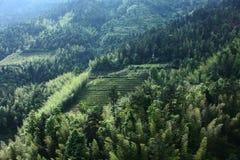 在山的竹子 免版税库存照片