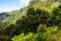 在山的笤帚在马德拉岛的海岛的北部 免版税库存图片