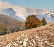 在山的第一雪 库存图片