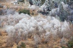 在山的第一霜 库存图片