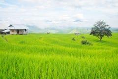 在山的米大阳台,和那里是小屋和树在米领域中间 免版税库存图片