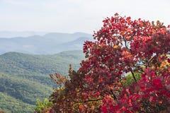 在山的红色秋天树 库存图片