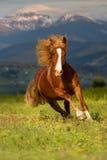 在山的红色马 免版税库存照片