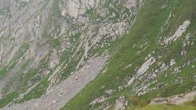 在山的绵羊 高山峰顶landskape背景 少女峰,Bernese高地 阿尔卑斯、旅游业和冒险远足 股票视频