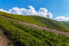 在山的绿色倾斜的道路在与云彩的明亮的蓝天下 免版税库存照片