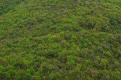 在山的绿色树 图库摄影