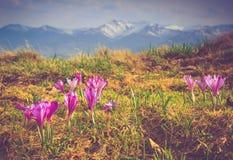 在山的美丽的春天花 免版税图库摄影