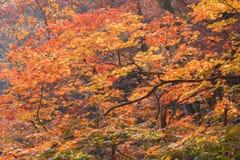 在山的美好的五颜六色的秋天在汉城韩国 图库摄影