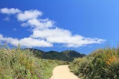 在山的美好的夏天风景与黄色花 库存照片
