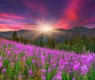 在山的美好的夏天风景 免版税图库摄影